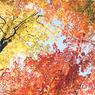 CONTAX RTSIIIで撮影した風景(colors)の写真(画像)