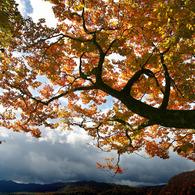 CANON Canon EOS-1DSで撮影した風景(波音)の写真(画像)