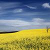 黄金色の丘