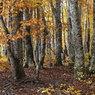 CANON Canon EOS 5D Mark IIで撮影した風景(ブナ林秋景(平庭高原))の写真(画像)