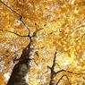CANON Canon EOS-1DSで撮影した風景(黄金シャワー)の写真(画像)