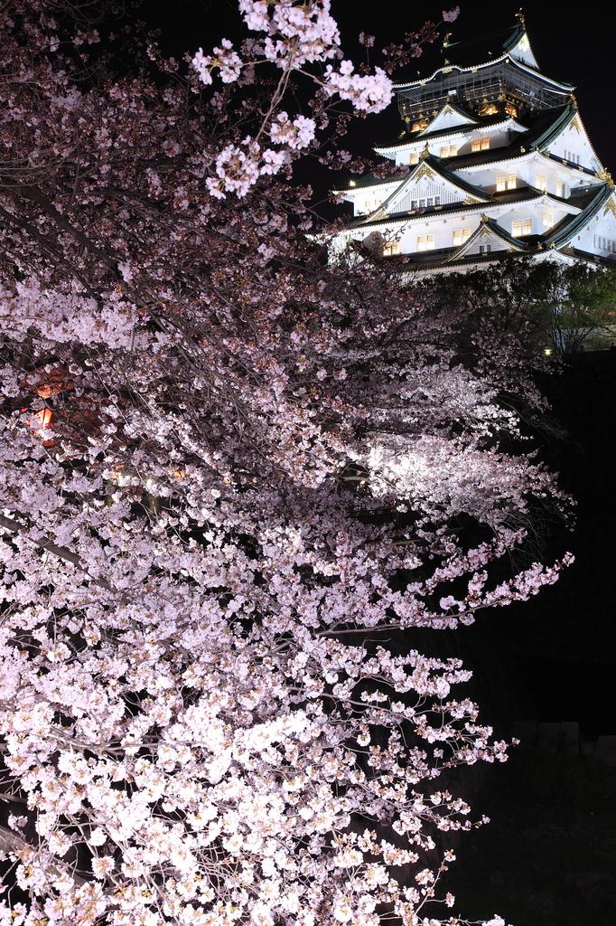 大阪城、夜桜
