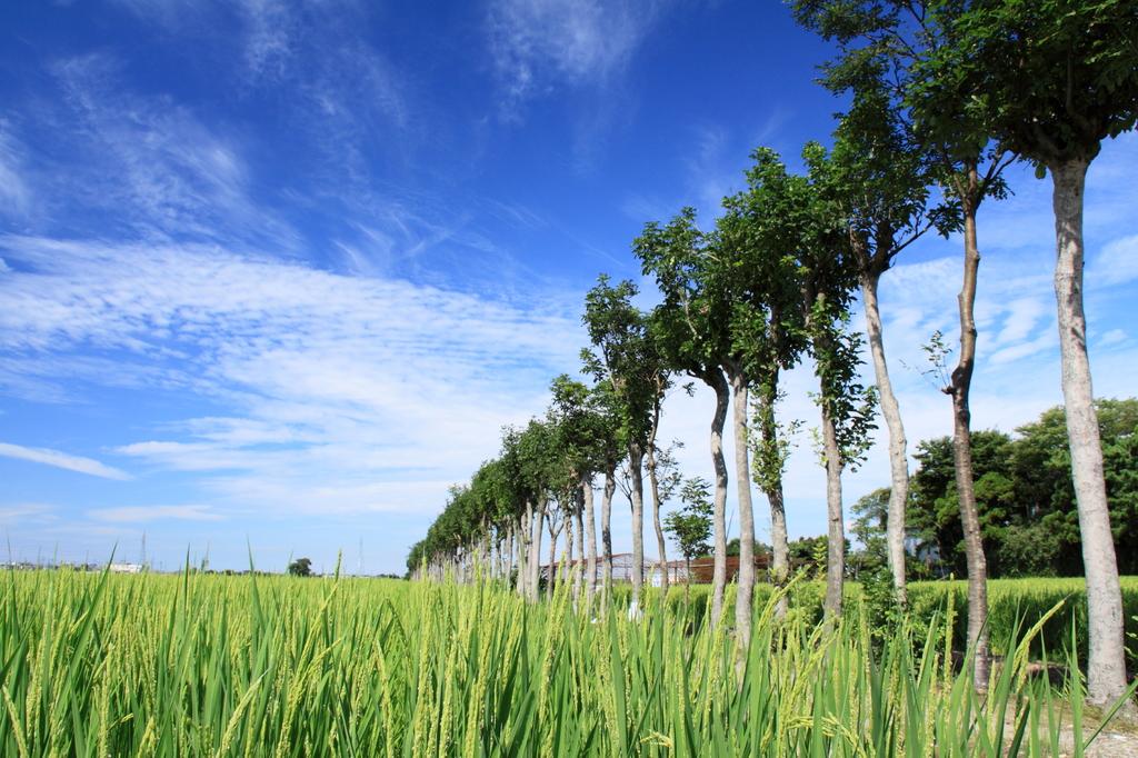 稲架木…夏