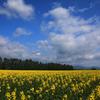 蒼い空・白い雲・黄色の大地