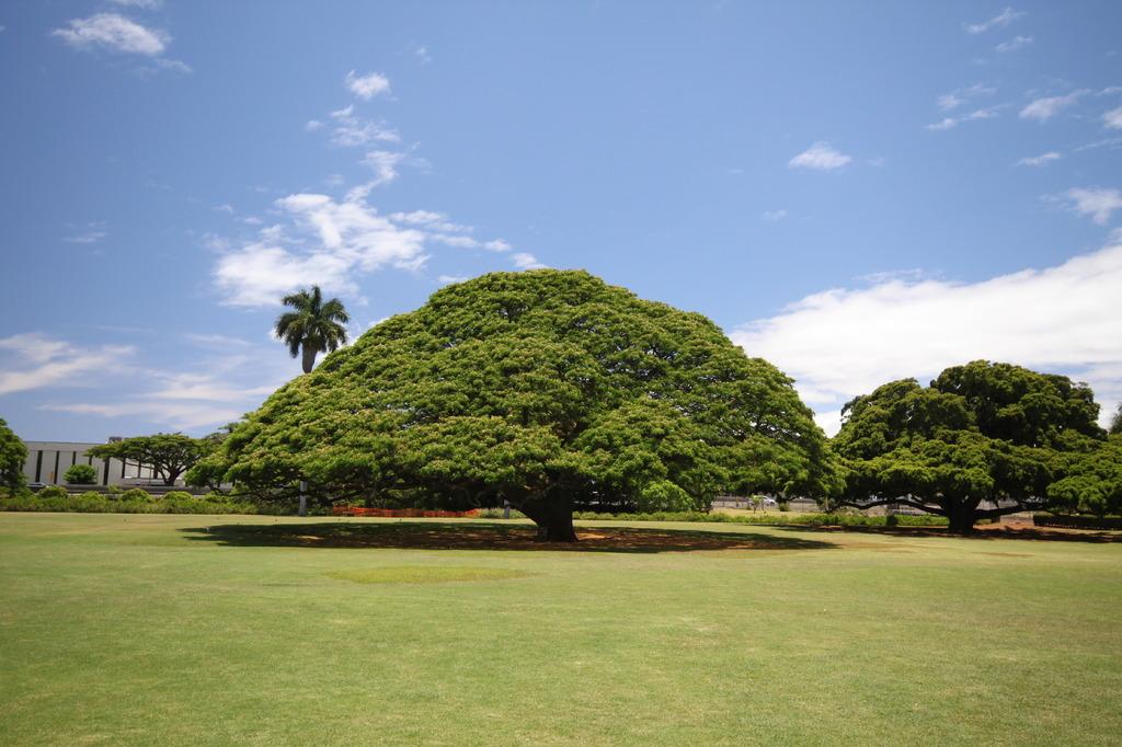 この木、なんの木~