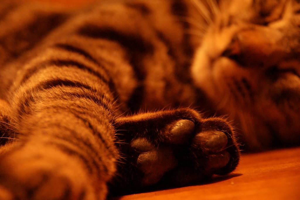 どの脚だ~^^