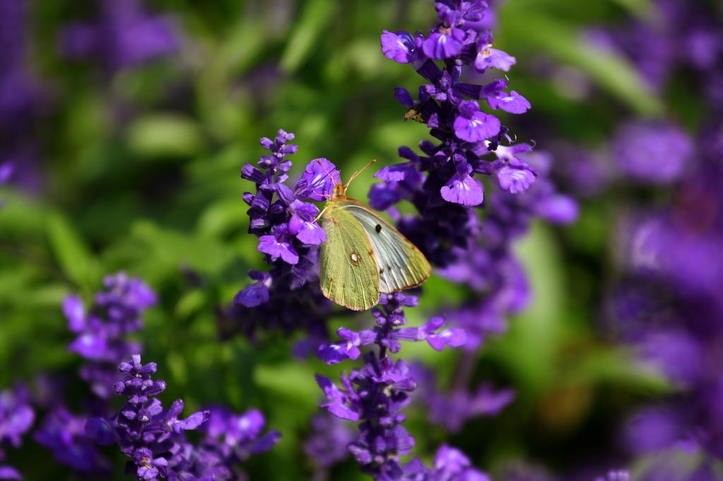 紫色に囲まれて、