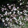 PANASONIC DMC-GF1で撮影した植物(P1010863)の写真(画像)