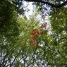 PANASONIC DMC-GF1で撮影した植物(P1020215)の写真(画像)