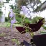 KYOCERA CONTAX Tvs Digitalで撮影した植物(KICX1825)の写真(画像)