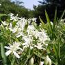 KYOCERA CONTAX Tvs Digitalで撮影した植物(KICX1719)の写真(画像)