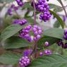 KYOCERA CONTAX Tvs Digitalで撮影した植物(KICX1805)の写真(画像)