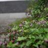PANASONIC DMC-GF1で撮影した植物(P1020246)の写真(画像)