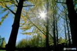 公園の秋 - 光芒Ⅱ -