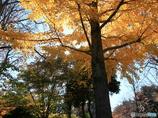 公園の秋 - 紅葉 -