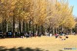 公園の秋 - 芝生広場 -