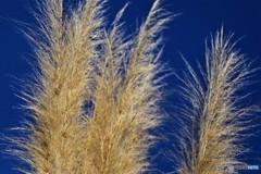 大草原の草