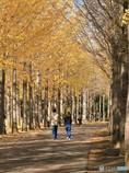 公園の秋 - 散歩 -