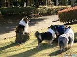 公園の秋 ‐ コリー ‐