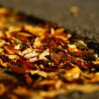 SONY DSLR-A200で撮影した植物(道端の秋)の写真(画像)
