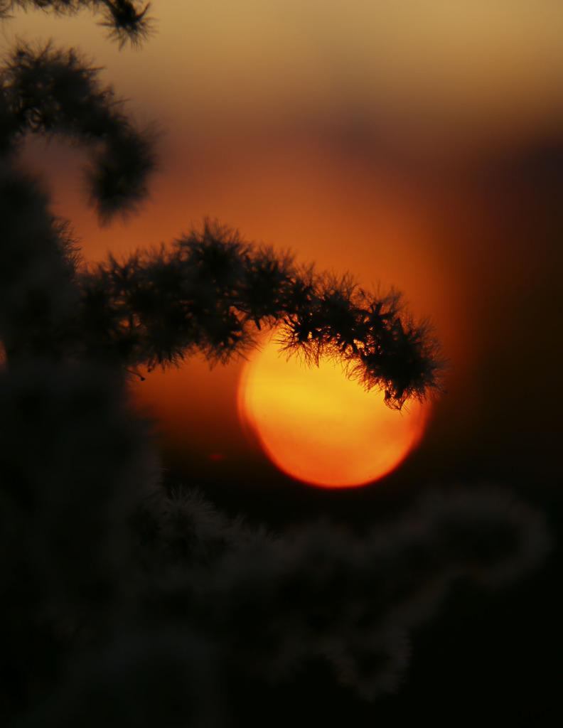 夕陽円ボケをつかまえる