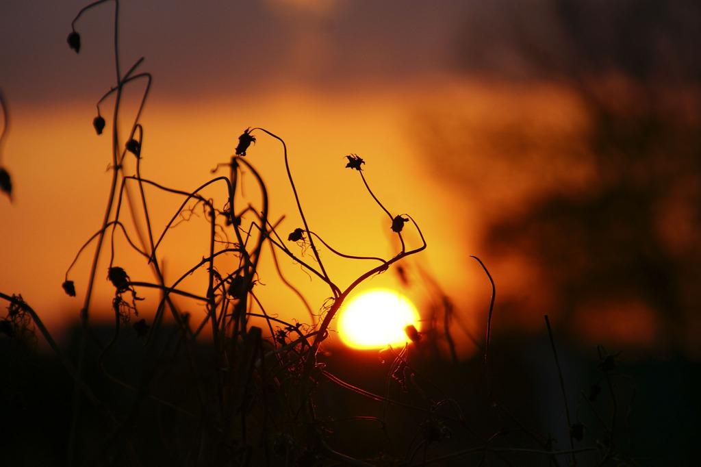 晩秋の夕刻