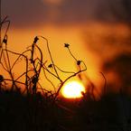 SONY DSLR-A200で撮影した風景(晩秋の夕刻)の写真(画像)