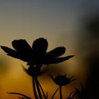 SONY DSLR-A200で撮影した風景(秋の夕暮れ)の写真(画像)