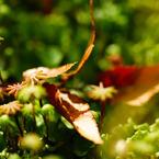 SONY DSLR-A200で撮影した植物(小さい秋みつけた~)の写真(画像)