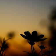 SONY DSLR-A200で撮影した風景(秋のたそがれ)の写真(画像)