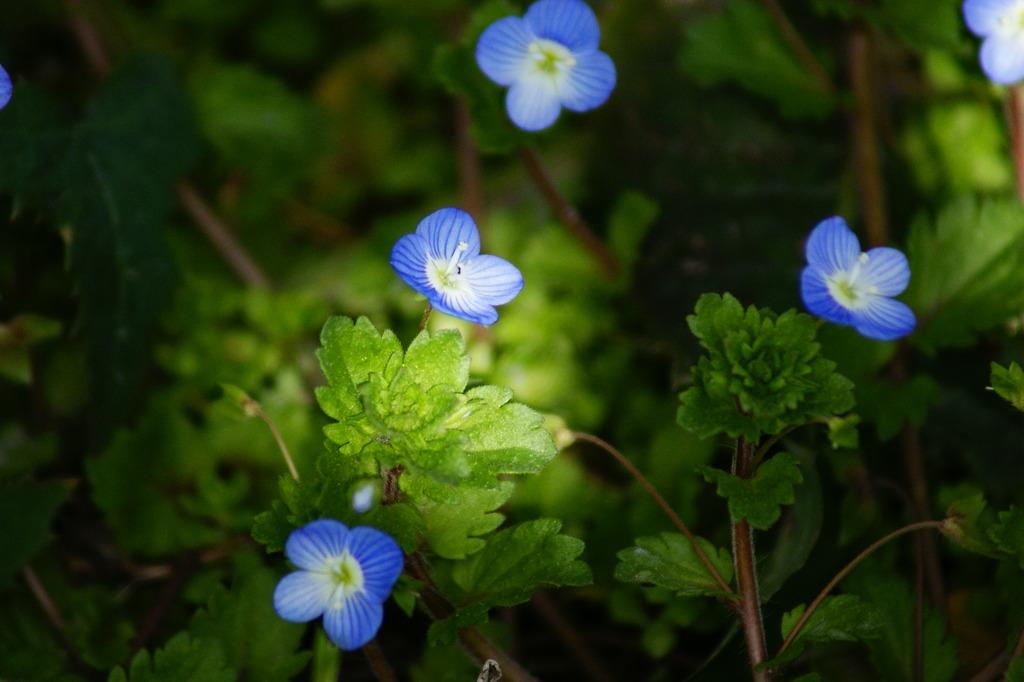 春の日光に照らされる花