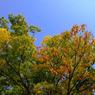 SONY DSLR-A200で撮影した風景(色つきはじめ)の写真(画像)