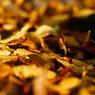 SONY DSLR-A200で撮影した植物(落葉)の写真(画像)