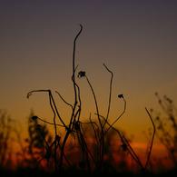 SONY DSLR-A200で撮影した風景(燃える草むら)の写真(画像)