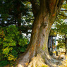 SONY DSLR-A200で撮影した風景(大樹の秋)の写真(画像)
