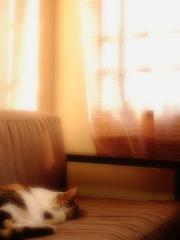 微睡みの午後