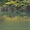 黄色い水鏡