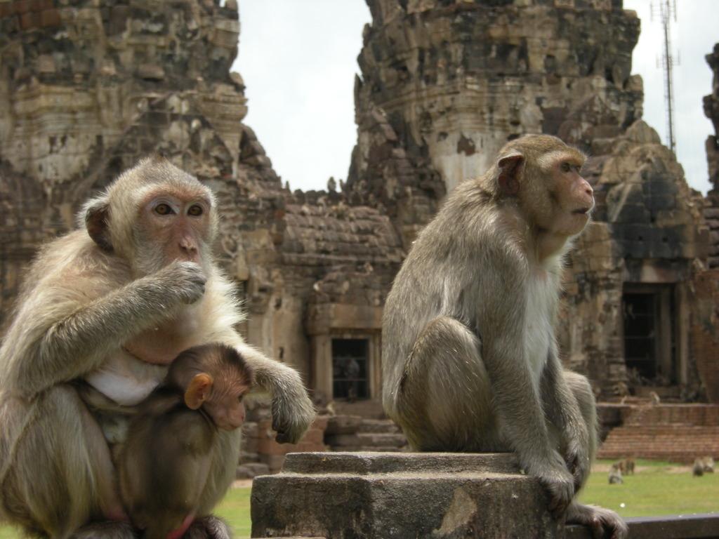 サルとクメール遺跡