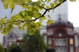 銀杏と東京駅