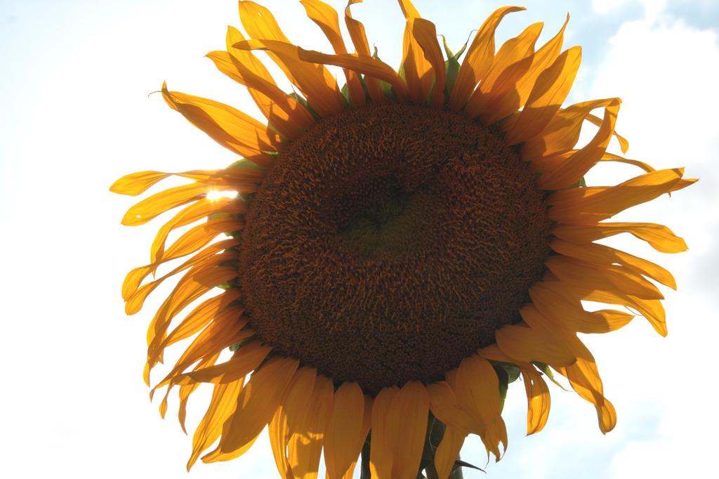 地上の太陽
