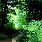 CANON Canon EOS Kiss X3で撮影した風景(道)の写真(画像)