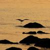 夕日の海岸で