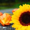 思い出を結んだ夏の花