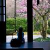 桃と桜と娘
