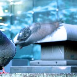 NIKON NIKON D40で撮影した動物(翼Ver.2.0)の写真(画像)