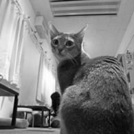 NIKON COOLPIX P6000で撮影した動物(はいご)の写真(画像)