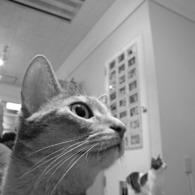 NIKON COOLPIX P6000で撮影した動物(発見)の写真(画像)