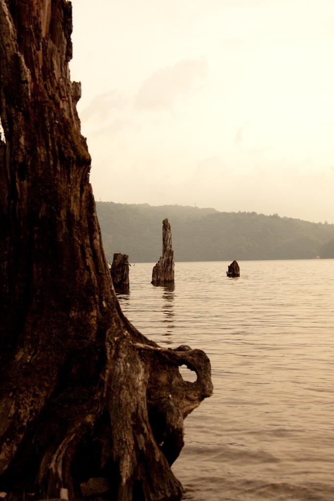 湖に佇む枯木2