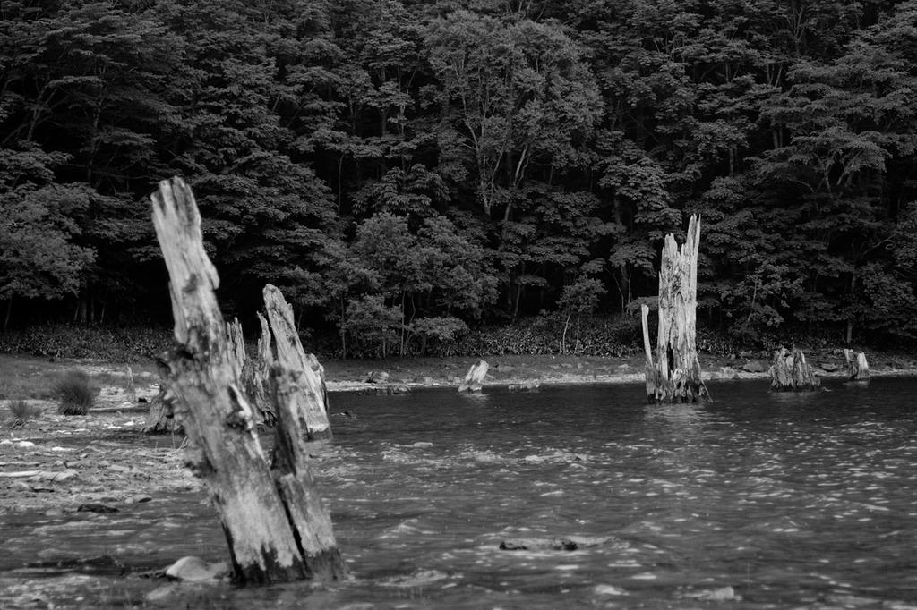 湖に佇む枯木