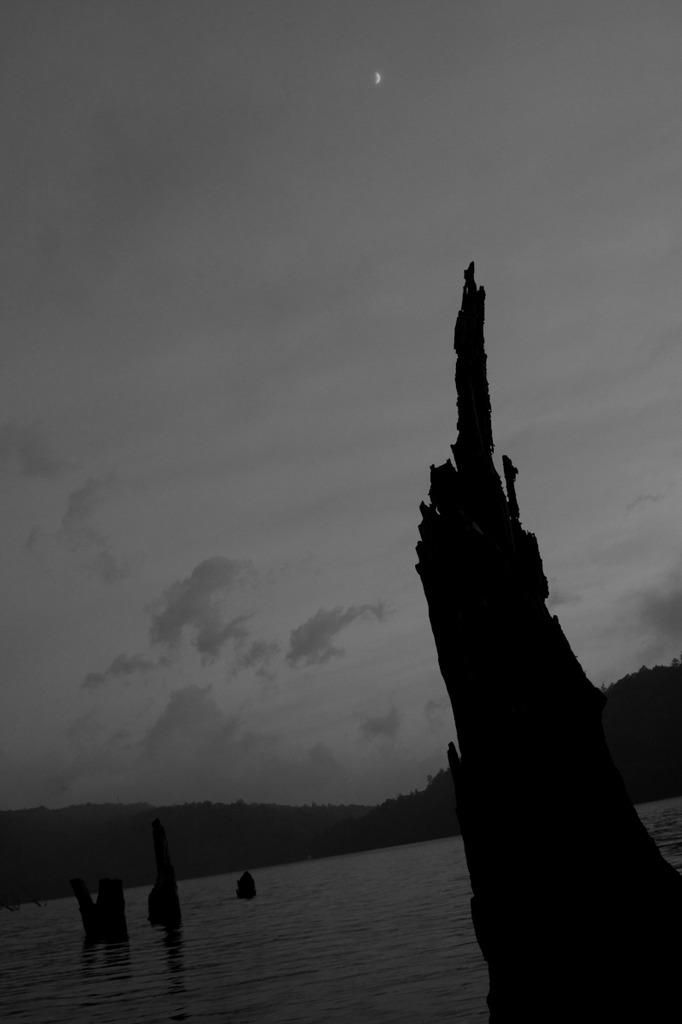 湖に佇む枯木と月